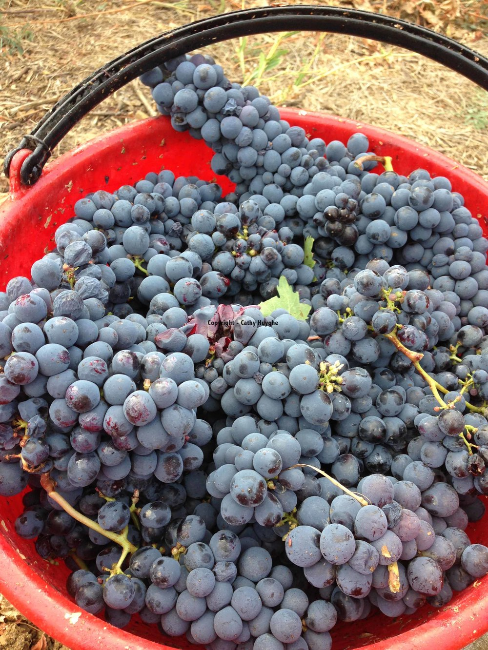 Bucket of Brunello_Montalcino.jpg