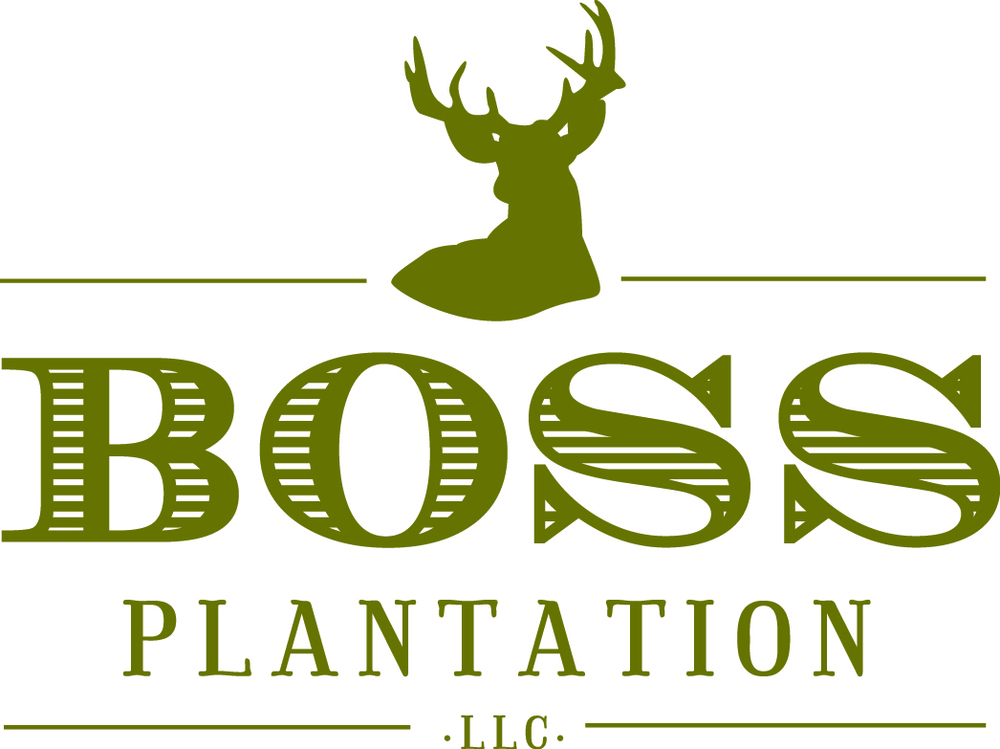 Boss Plantation logo - 2 gold.jpg