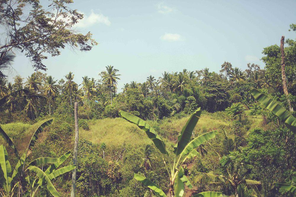 Bali-21.jpg