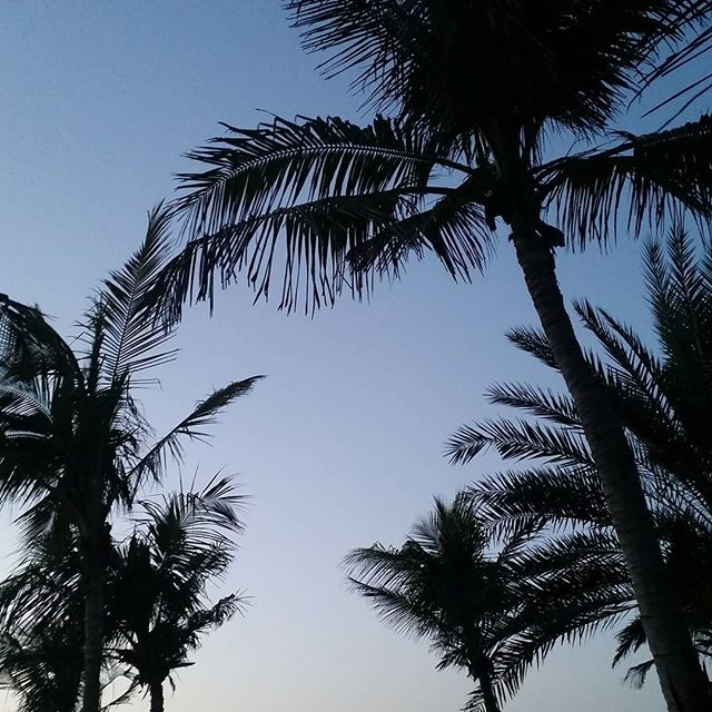 Clear skies are back. Who's ready for the #weekend?! 🌴  #palms #beach #twilight #MadinatJumeirah #Dubai #mydubai #uae