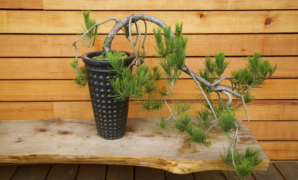 CONTAINERS & BOXWOODS