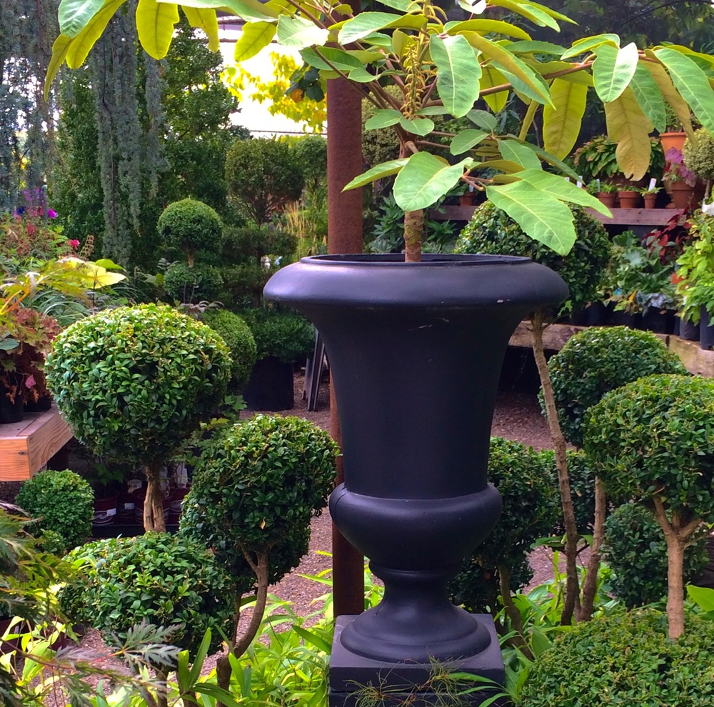 Topiaries and Urn Shaped Planter