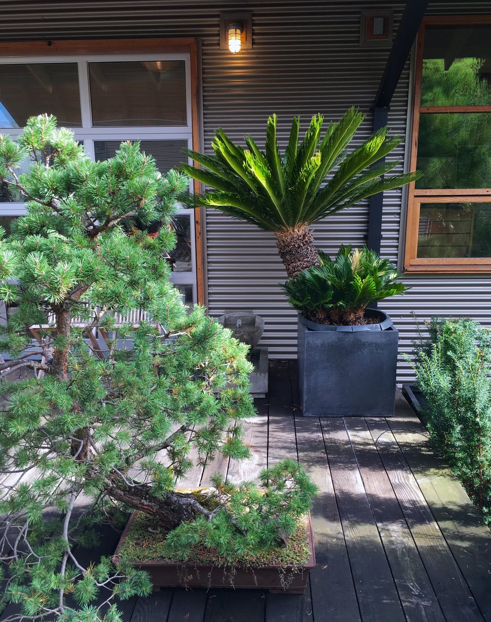 Shrubs, Trees, and Topiaries