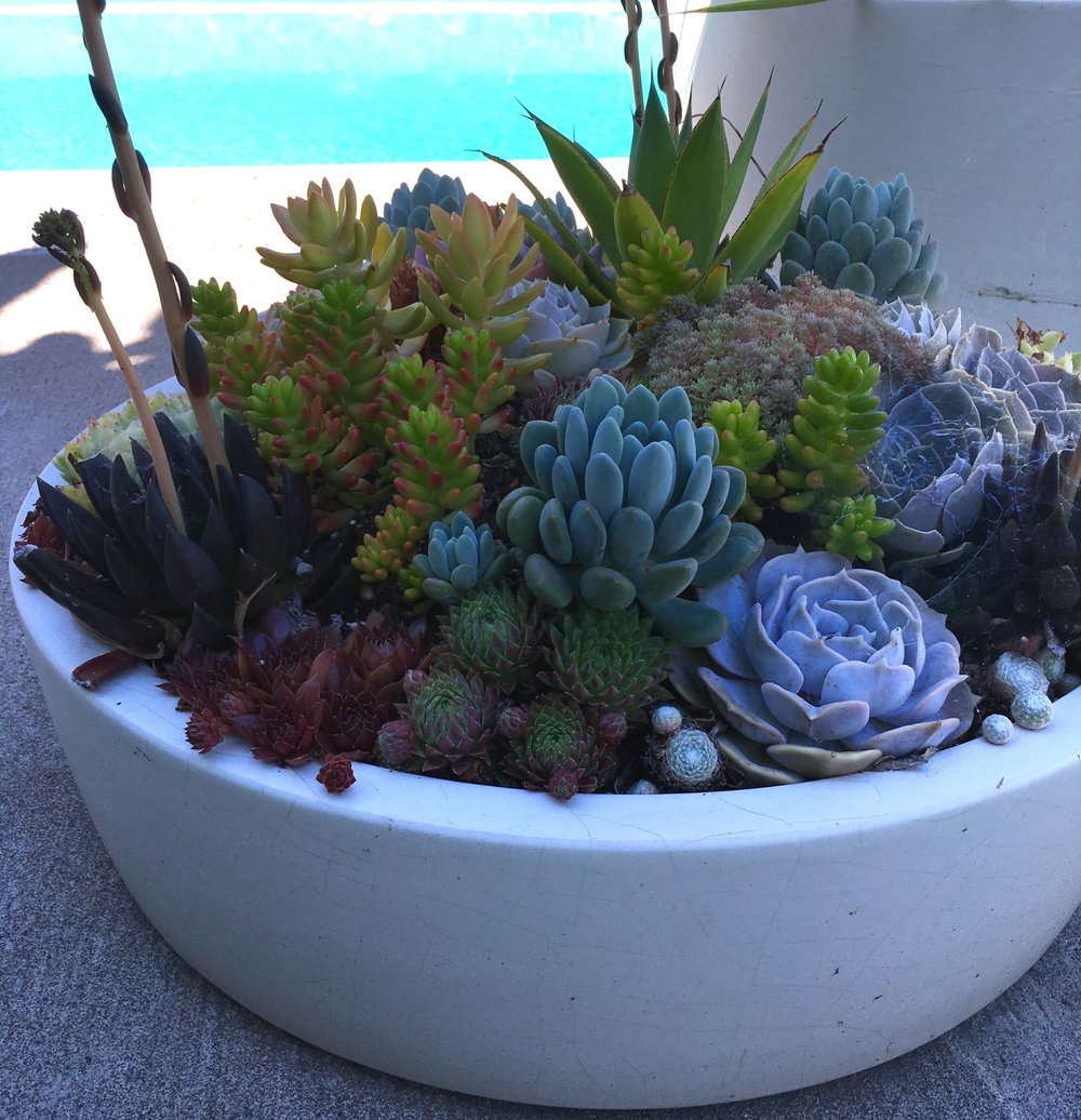 Succulent Container Design