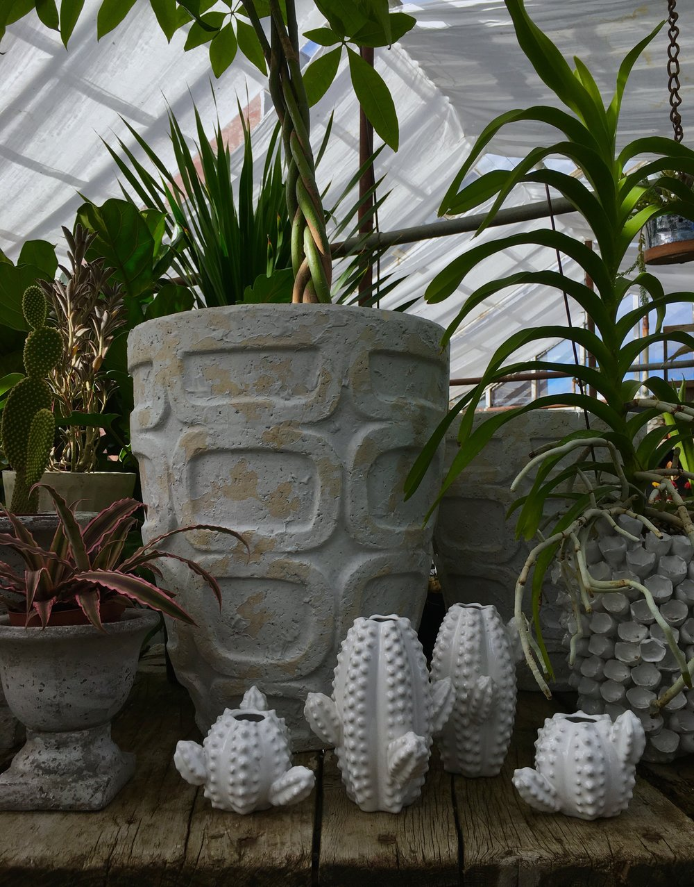 Mid-century Containers and succulents