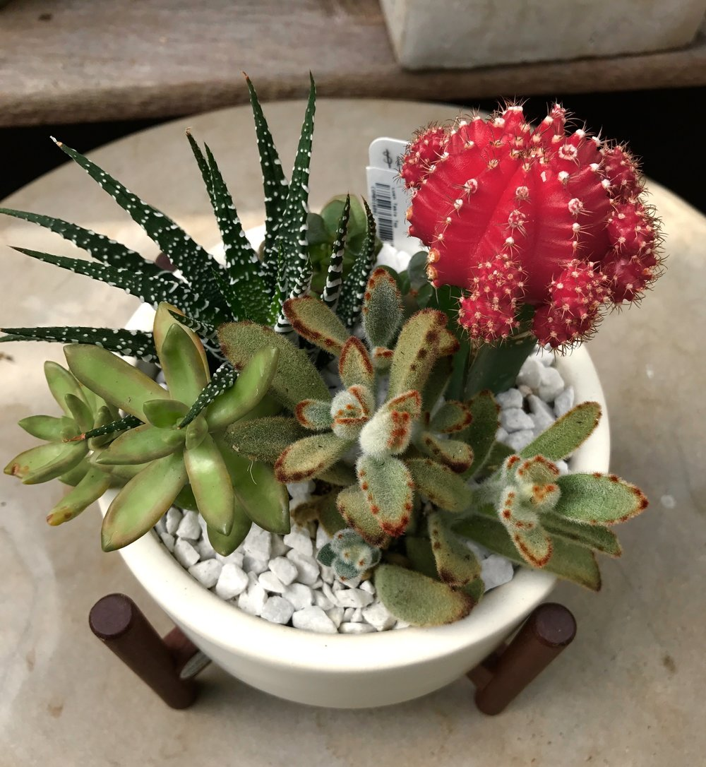 Succulents in a Modernica Container