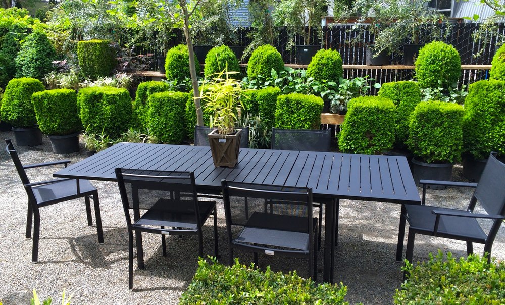 Boxwood Hedges and Outdoor Furniture
