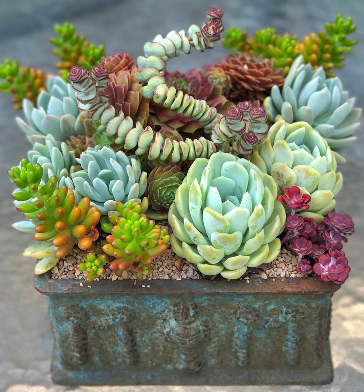 Pmarius_Nursery_Succulents_Event.jpg