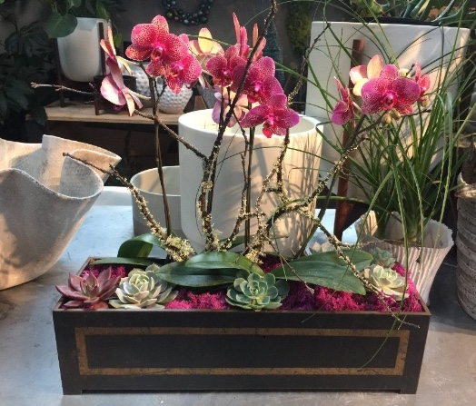holiday orchid and succulent planter