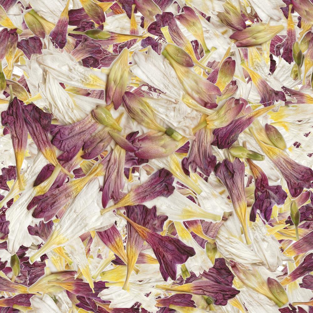 Cut Flowers sm.jpg