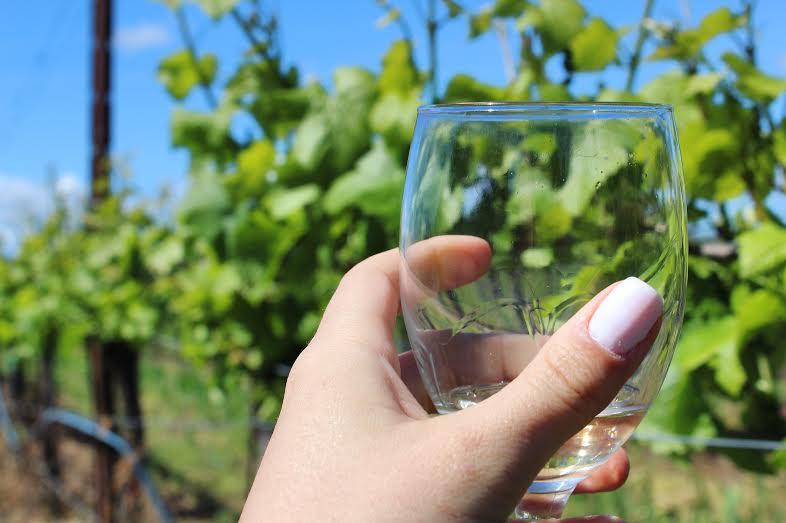glass of wine in sonoma valley.jpg