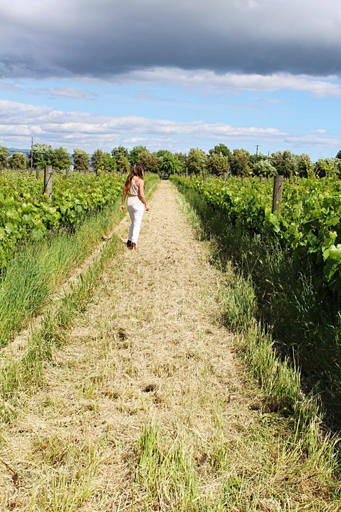 vineyard pic in sonoma valley california.jpg