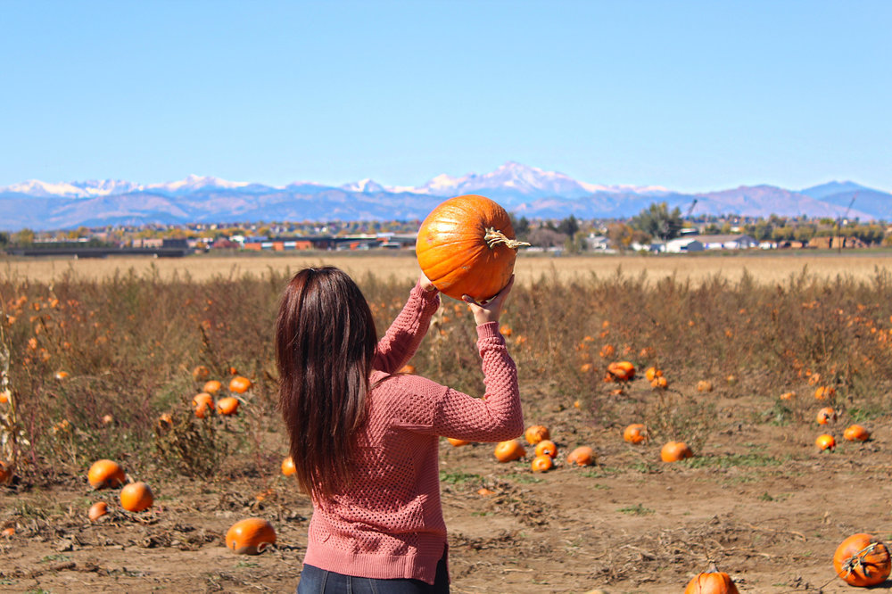 colorado-pumpkin-patch.jpg
