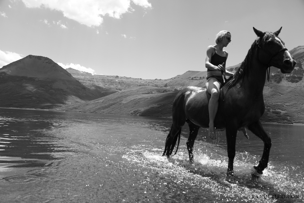 horse swimming patagonia.jpeg