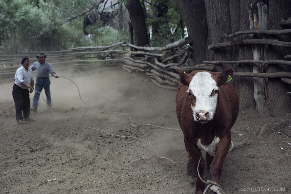 Argentine beef.jpeg