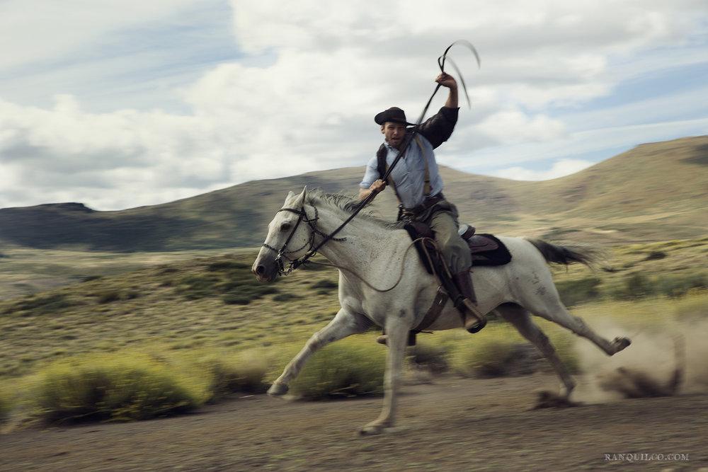 horses in patagonia.jpg