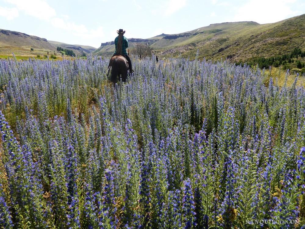 patagonia horse trips.jpeg