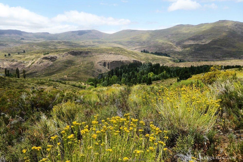 horse trekking patagonia.JPG