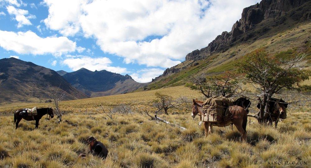 mule pakcing patagonia.jpeg