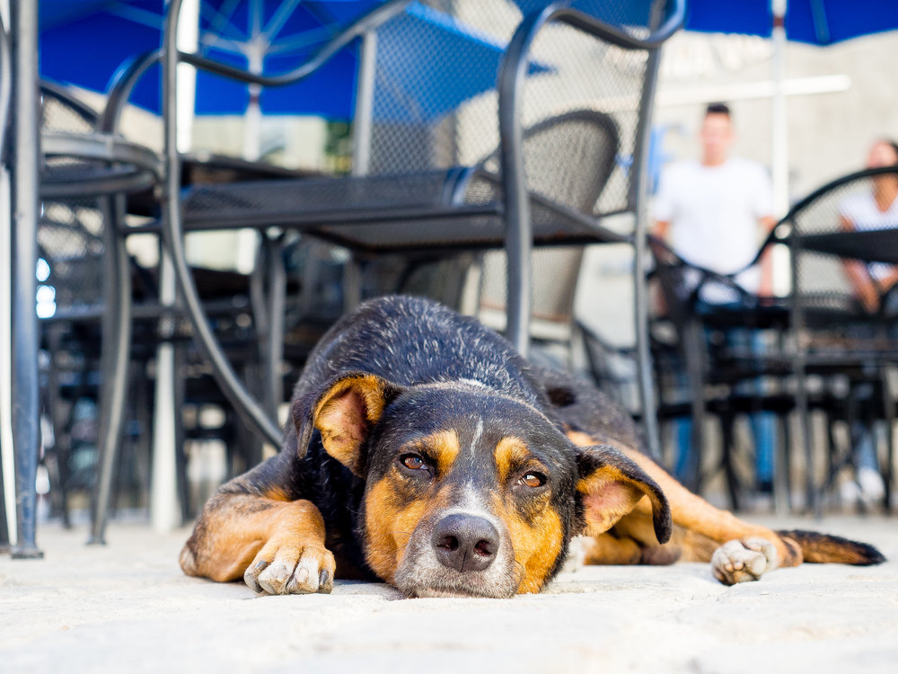 Cuba dog.jpg