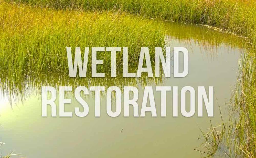 wetlandrestoration.001.jpg