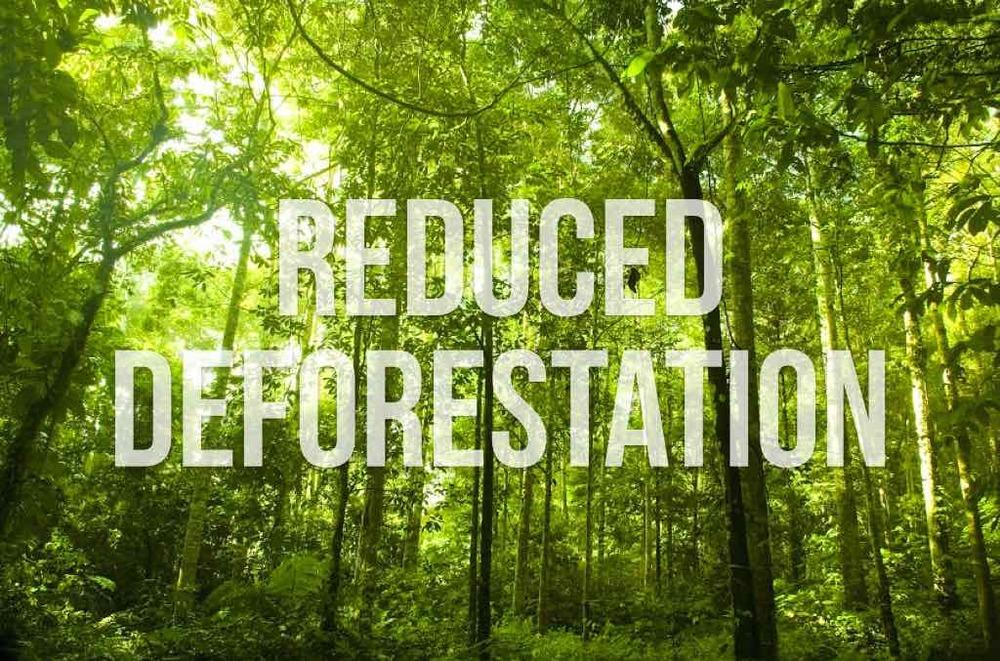 reduceddeforestation.001.jpg