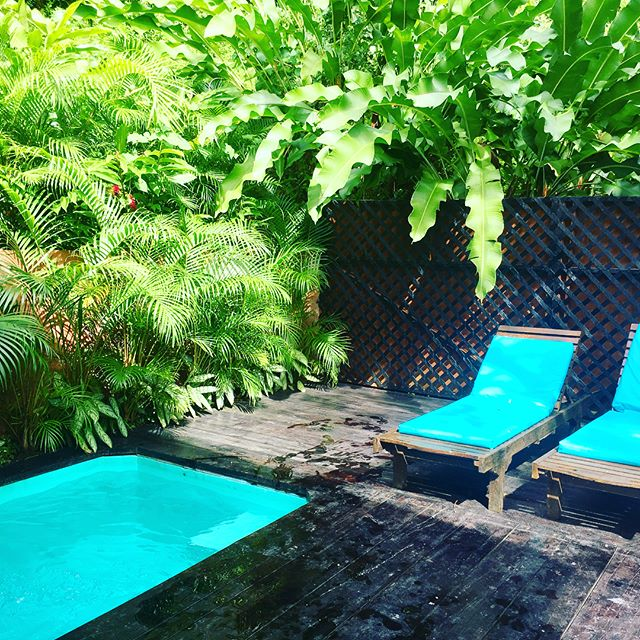 This is our sweet little rainforest hideaway — a private cottage amidst a working cocoa plantation. The breeze, birds and frogs sing us to sleep. I never want to leave. 🌴☀️🌴