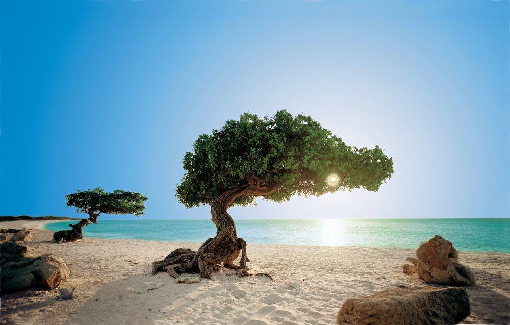 5. Aruba