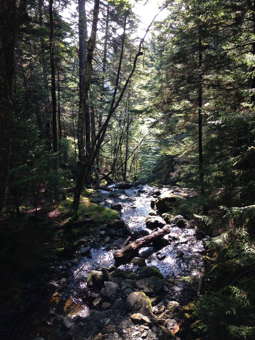 Cabello by Carolina- Coppermine Trail