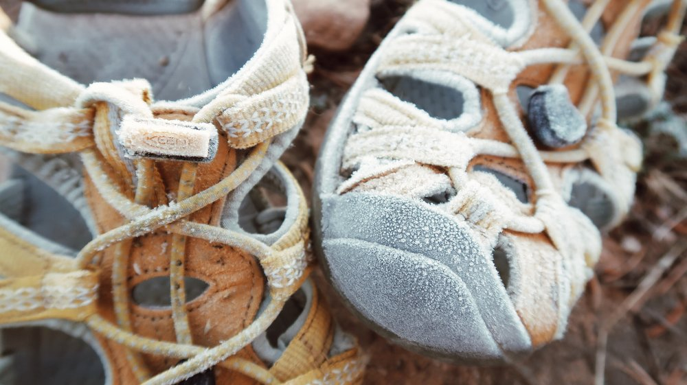 Overnight, temperatures got to a low of 27 degrees, a perfect recipe for frost covered shoes!