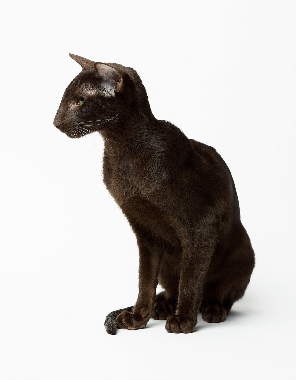 Cat_OR1A4442_28x36_1550px.JPG