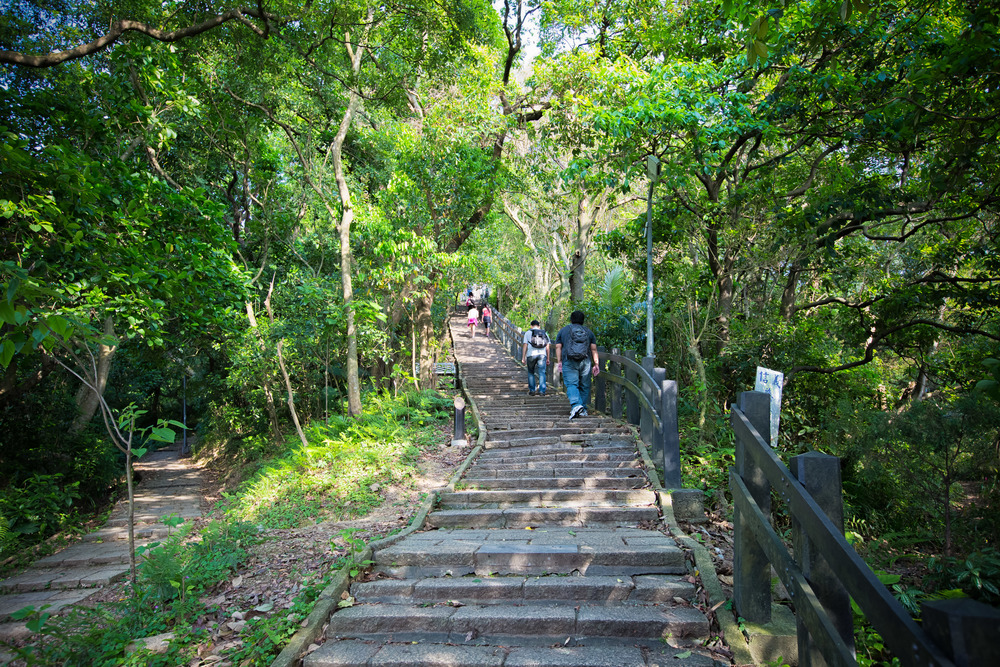 The path up Elephant Mountain