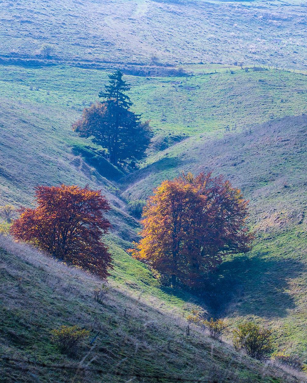 i tre alberi-3713.jpg