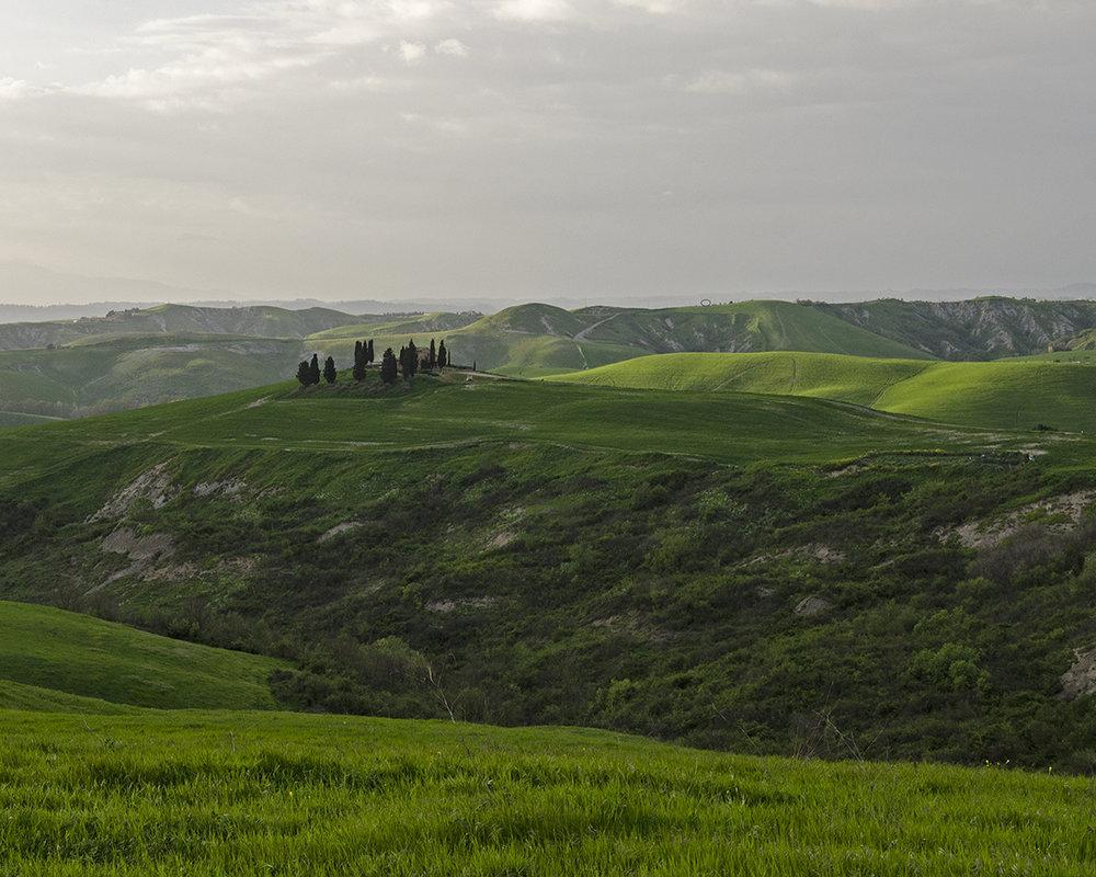 crocchio di cipressi sulla collina.jpg