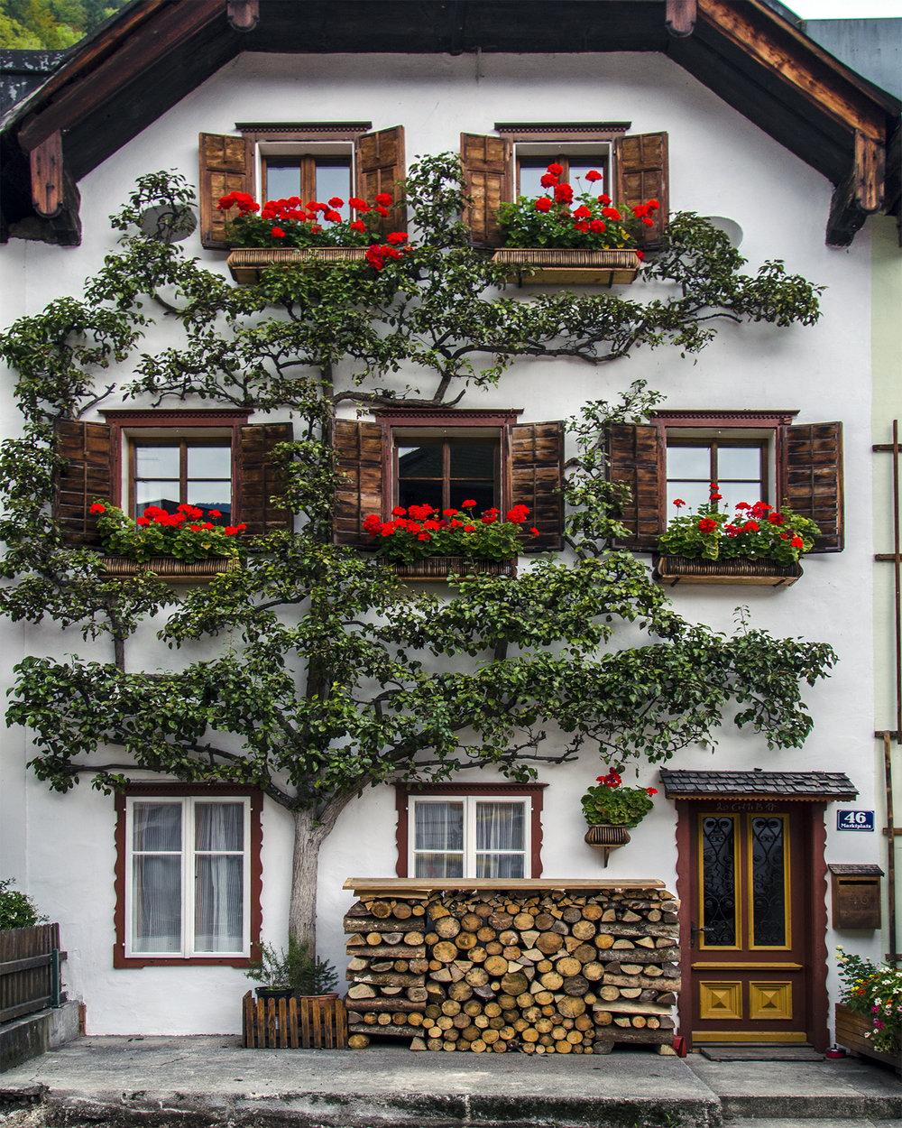 rampicante ad Hallstatt-Alta Austria-8191.jpg
