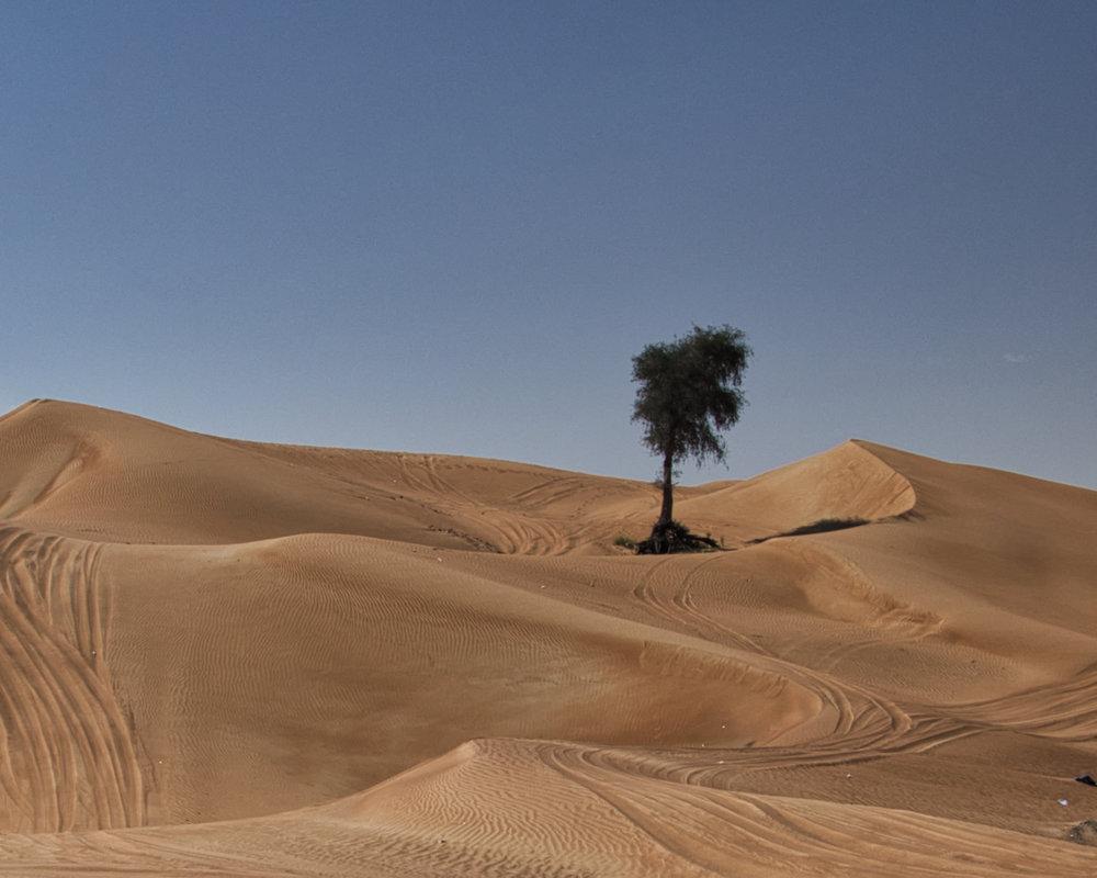 deserto dubai-albero-0995.jpeg