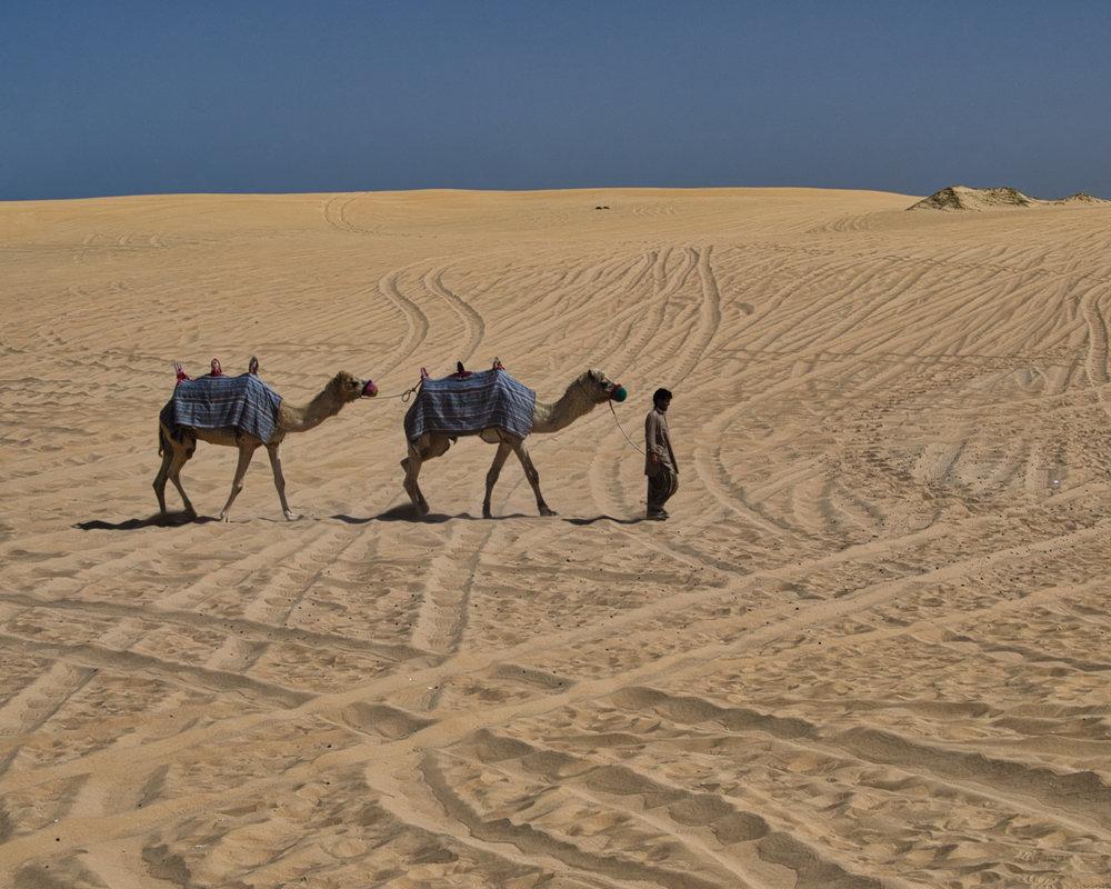 2 cammelli e 1 cammelliere-1017.jpeg