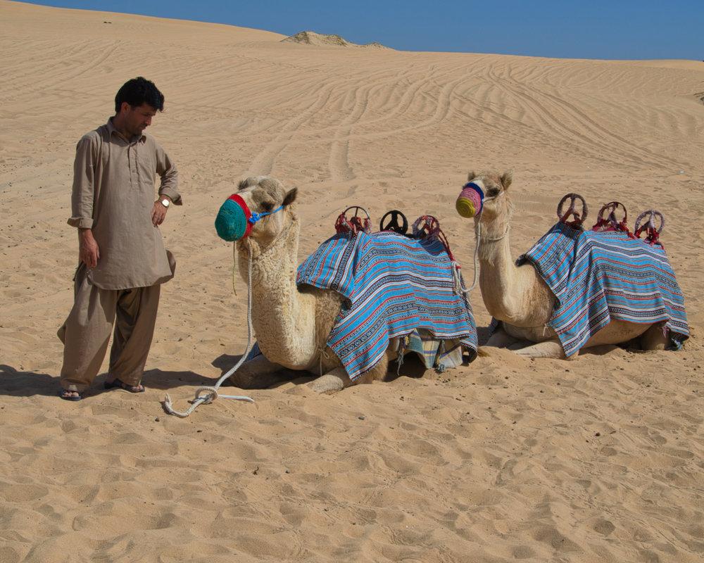 1 cammelliere e 2 cammelli-1026.jpeg