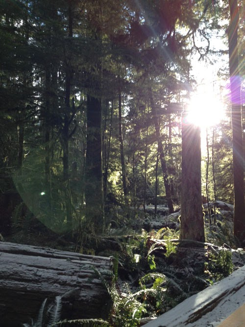 Forest+1.jpg