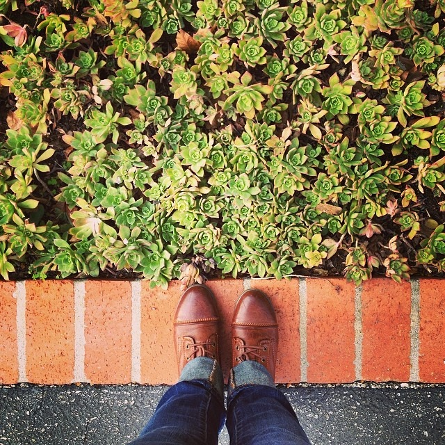 courtneyrosen :     #fromwhereistand #californiadreaming #succulents (at Downtown Ojai)