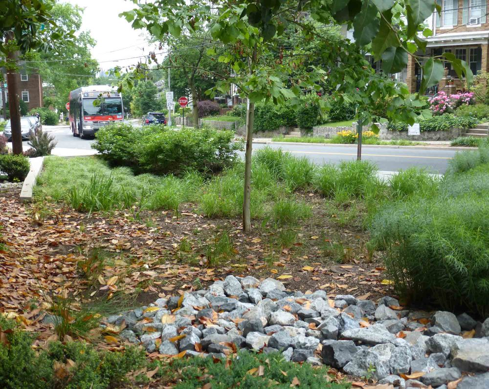 The city created this rain garden—a type of green infrastructure—at the intersection of Tunlaw & 37th Street.