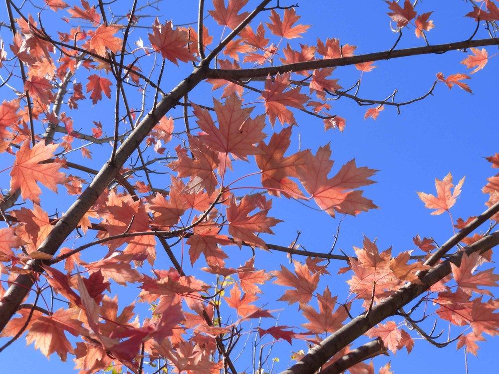 2016.11-Leaf-pick-up.JPG