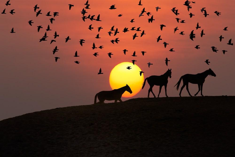 Pic by  Hani Jajeh