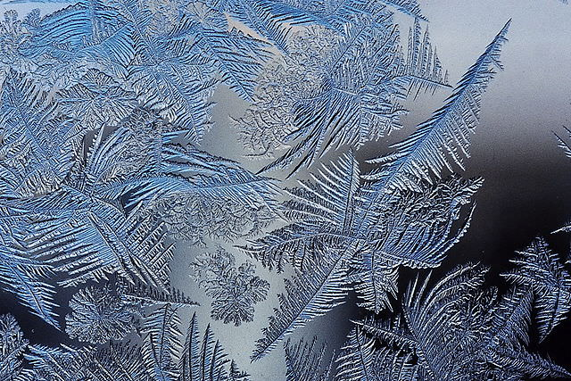 Frost ferns. Photo by Schnobby