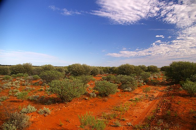 Rehabilitated country at Maralinga, the former British nuclear test site. Photo by  Wayne England,  who worked in the clean-up of radioactive materials there