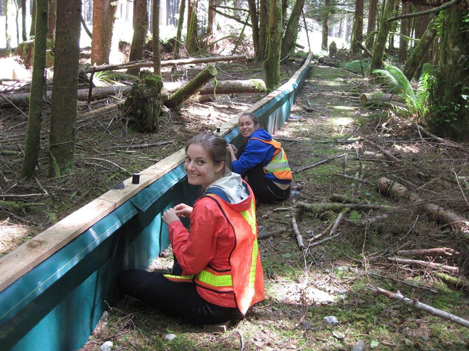 Amphibian fence repair (photo: B. Beasley)