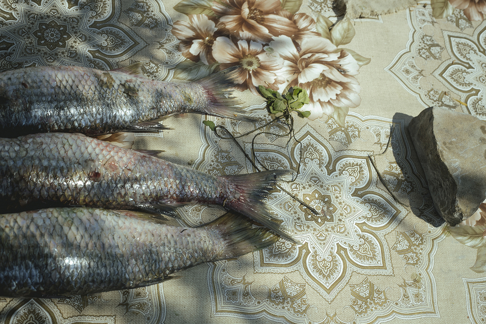 Catch of the day, before preparing the daily fish soup, Sulina, Romania, 2015