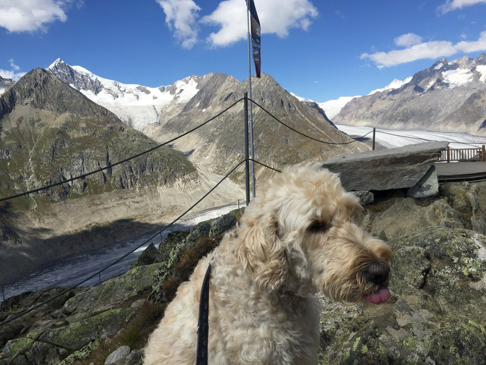 Huxley not impressed by the Aletsch Glacier in Switzerland.