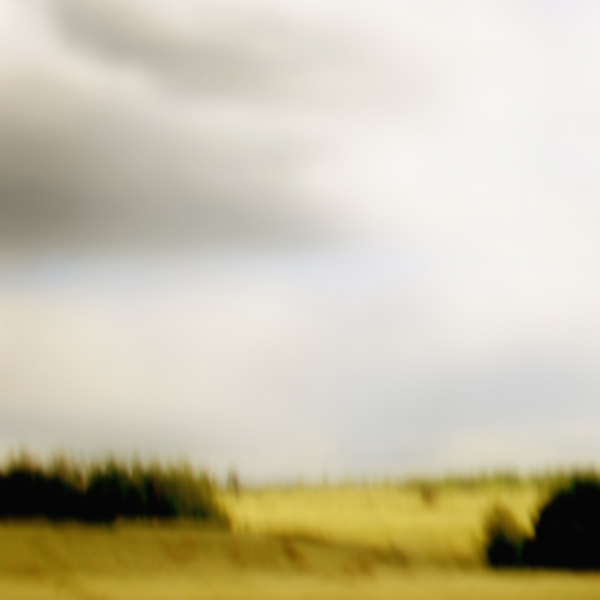landscape 009.jpg