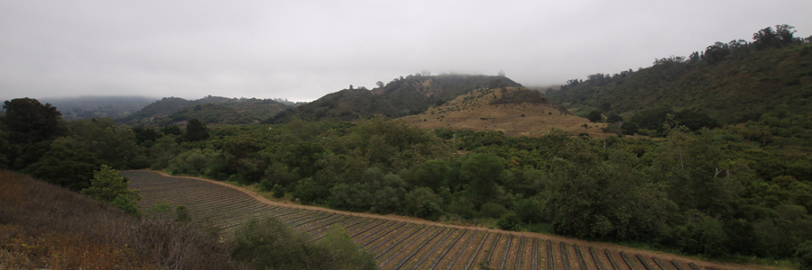 Panorama 040_sm.jpg